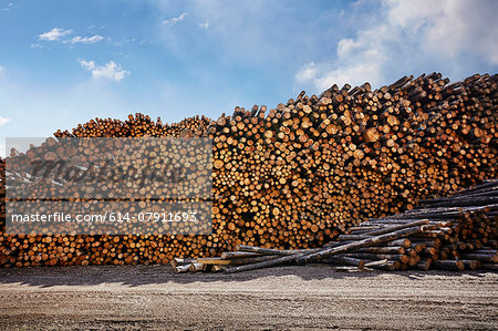 Large stack of logged timber in timber yard Stock Photo - Premium Royalty-Free, Image code: 614-07911693