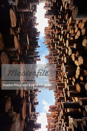 Low angle view of stacked timber in timber yard Stock Photo - Premium Royalty-Free, Image code: 614-07911694
