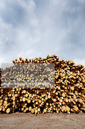 Stacked freshly logged timber in timber yard Stock Photo - Premium Royalty-Free, Image code: 614-07911695
