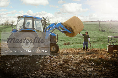 Farming brothers driving tractor moving hay stack on dairy farm Stock Photo - Premium Royalty-Free, Image code: 614-08065937