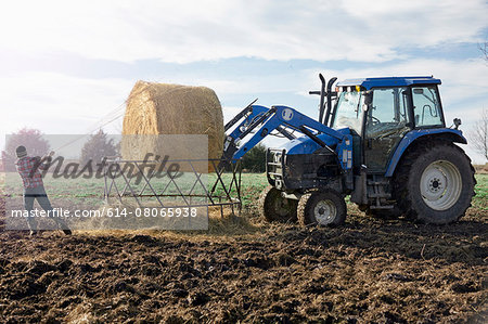 Boy farmer removing netting from hay stack in dairy farm field Stock Photo - Premium Royalty-Free, Image code: 614-08065938