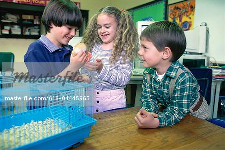 Girl and two boys playing with school hamster Stock Photo - Premium Royalty-Free, Image code: 618-01445965