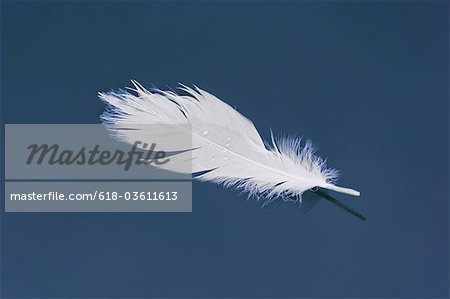 White feather floating in harbor Stock Photo - Premium Royalty-Free, Image code: 618-03611613