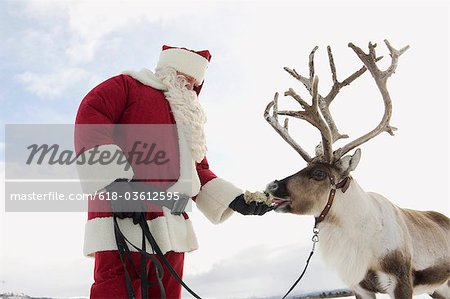 Santa Claus feeding his reindeer Stock Photo - Premium Royalty-Free, Image code: 618-03612595