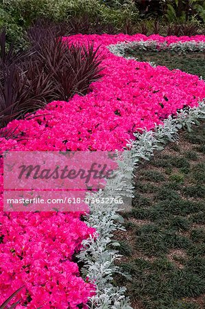 Planting of Azeleas Curve pattern Callaway Garden Stock Photo - Premium Royalty-Free, Image code: 618-03632766