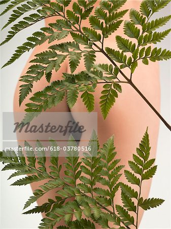 Fern leaves covering young nude woman's buttocks, studio shot Stock Photo - Premium Royalty-Free, Image code: 618-03780516