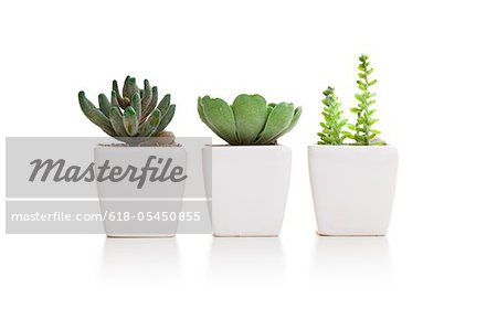 Three varieties of mini cactus in pots Stock Photo - Premium Royalty-Free, Image code: 618-05450855