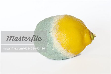 Half rotten lemon Stock Photo - Premium Royalty-Free, Image code: 618-06052456