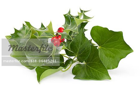 Holly and Ivy Stock Photo - Premium Royalty-Free, Image code: 618-06405261