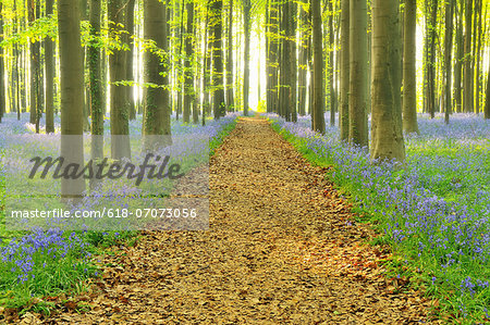 Path through Bluebells Forest Stock Photo - Premium Royalty-Free, Image code: 618-07073056