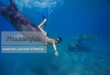 Child interacting with dolphin. Stock Photo - Premium Royalty-Free, Image code: 618-07398136