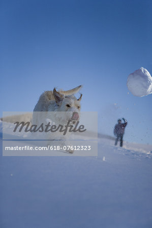 Dog running though snow chasing snowball Stock Photo - Premium Royalty-Free, Image code: 618-07612323