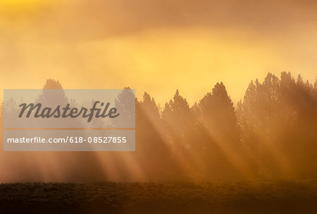 AM sunrise through fog in Hayden Valley yellowstone Stock Photo - Premium Royalty-Free, Image code: 618-08527855