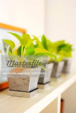 Potted Plants In A Row Set On Shelf Stock Photo - Premium Royalty-Free, Image code: 622-06009581