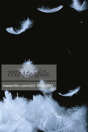 White Feathers Against Black Background Stock Photo - Premium Royalty-Free, Image code: 622-06163887