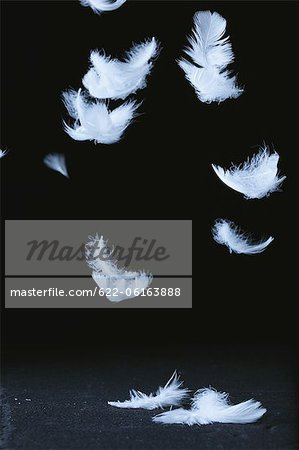 White Feathers Flying Against Black Background Stock Photo - Premium Royalty-Free, Image code: 622-06163888