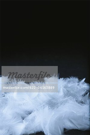 Close Up Of Feathers Stock Photo - Premium Royalty-Free, Image code: 622-06163889