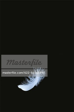 One Feather Falling Down Stock Photo - Premium Royalty-Free, Image code: 622-06163890