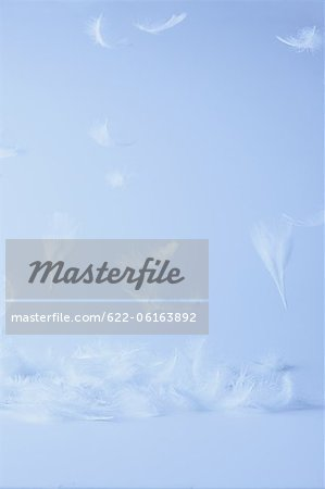 White Feathers Flying Against Colored Background Stock Photo - Premium Royalty-Free, Image code: 622-06163892
