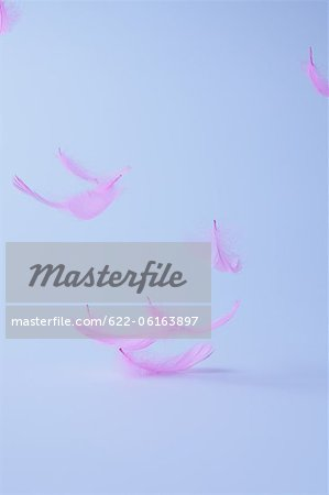 Pink Feathers Stock Photo - Premium Royalty-Free, Image code: 622-06163897