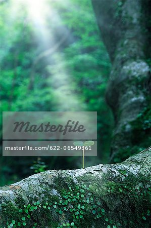 Green leaf Stock Photo - Premium Royalty-Free, Image code: 622-06549361