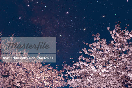 Stars and cherry blossoms Stock Photo - Premium Royalty-Free, Image code: 622-06842081