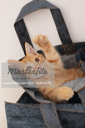 Cat Stock Photo - Premium Royalty-Free, Image code: 622-06842170