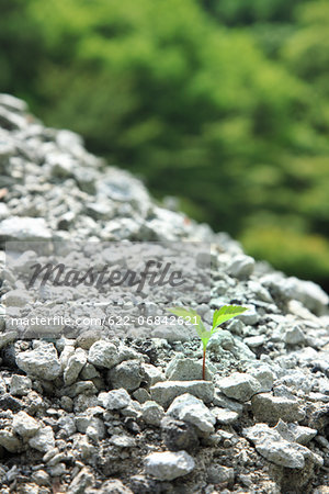 Green leaf sprouting from gravel Stock Photo - Premium Royalty-Free, Image code: 622-06842621