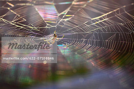 Spider and web Stock Photo - Premium Royalty-Free, Image code: 622-07108846