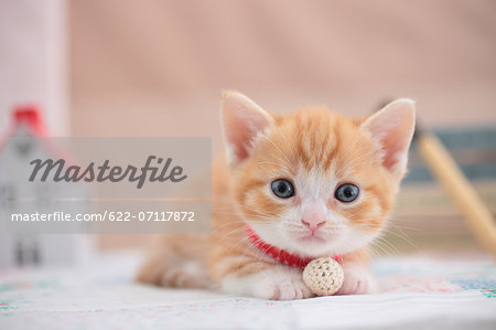Munchkin Stock Photo - Premium Royalty-Free, Image code: 622-07117872