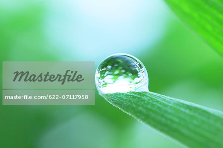 Water droplet on leaf Stock Photo - Premium Royalty-Free, Image code: 622-07117958