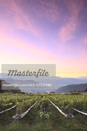Sunrise sky over vineyard, Yamanashi Prefecture Stock Photo - Premium Royalty-Free, Image code: 622-07117985