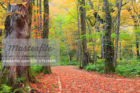 Autumn leaves Stock Photo - Premium Royalty-Free, Image code: 622-07519695