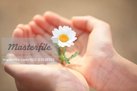 Child holding flower Stock Photo - Premium Royalty-Free, Image code: 622-07519762