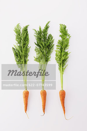 Carrots Stock Photo - Premium Royalty-Free, Image code: 622-07743599