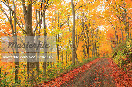 Autumn colors, Aomori Prefecture, Japan Stock Photo - Premium Royalty-Free, Image code: 622-07841346
