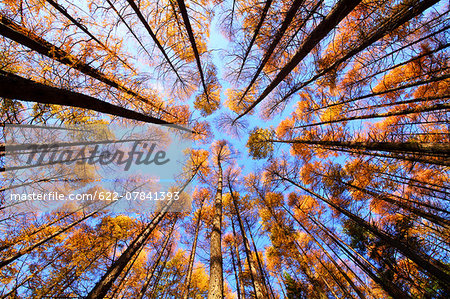 Autumn leaves Stock Photo - Premium Royalty-Free, Image code: 622-07841393