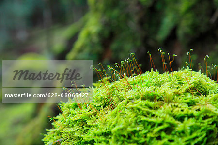 Greenery Stock Photo - Premium Royalty-Free, Image code: 622-08065427