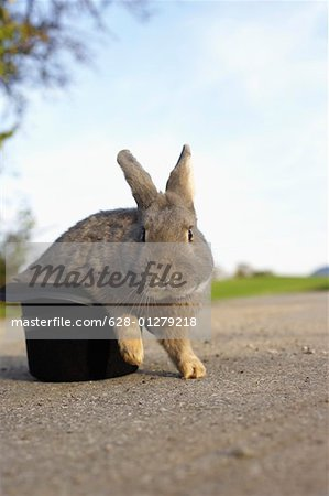 Grey rabbit sitting in a top hat, selective focus Stock Photo - Premium Royalty-Free, Image code: 628-01279218