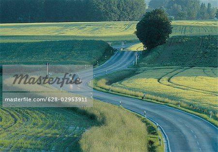 Country road after rainfall Stock Photo - Premium Royalty-Free, Image code: 628-02953911