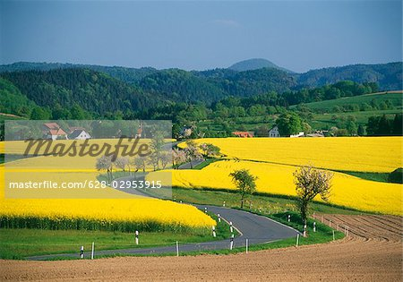 Blooming rape fields and country road, Saxon Switzerland, Germany Stock Photo - Premium Royalty-Free, Image code: 628-02953915