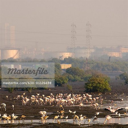 High angle view of a flock of birds in a lake, Mumbai, Maharashtra, India Stock Photo - Premium Royalty-Free, Image code: 630-01126698
