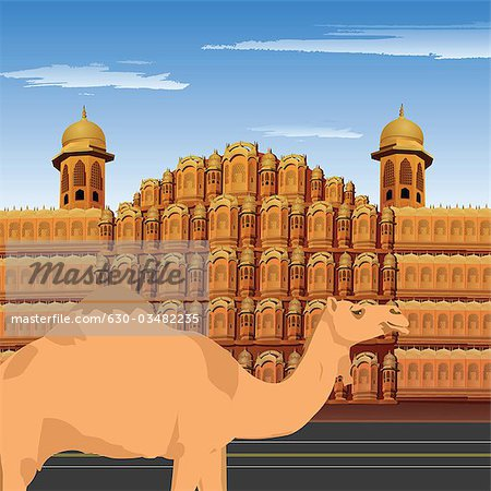 Camel standing in front of palace, Hawa Mahal, Jaipur, Rajasthan, India Stock Photo - Premium Royalty-Free, Image code: 630-03482235