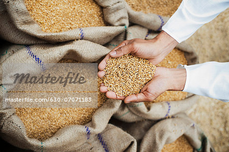 Man holding wheat grains from a sack in his cupped hands, Anaj Mandi, Sohna, Gurgaon, Haryana, India Stock Photo - Premium Royalty-Free, Image code: 630-07071183
