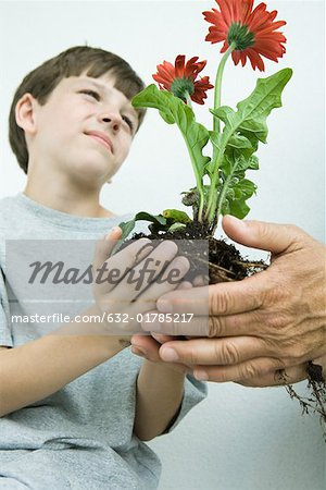 Boy holding flowers in cupped hands, low angle view Stock Photo - Premium Royalty-Free, Image code: 632-01785217