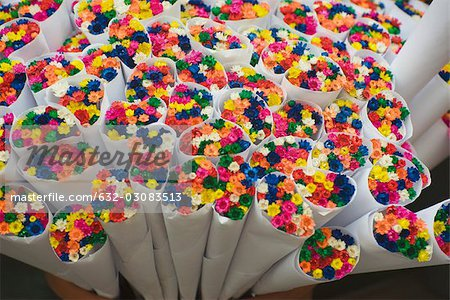 Bouquets of brightly colored dyed flowers Stock Photo - Premium Royalty-Free, Image code: 632-03083513