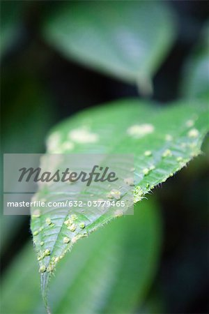 Close-up of leaf Stock Photo - Premium Royalty-Free, Image code: 632-03779465