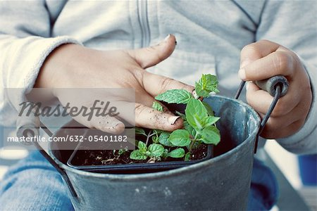 Child touching soil of mint plant, mid section Stock Photo - Premium Royalty-Free, Image code: 632-05401182