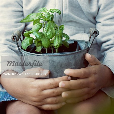 Child holding basil plant, mid section Stock Photo - Premium Royalty-Free, Image code: 632-05401299