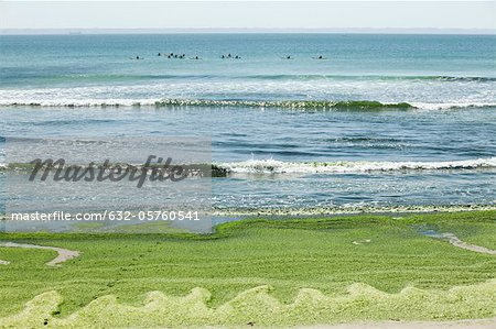 Toxic algae washed up on beach, Plage de Postolonnec, Crozon Peninsula, Finistère, Brittany, France Stock Photo - Premium Royalty-Free, Image code: 632-05760541